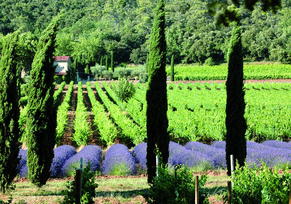 saint-tropez-wine-tour (4)